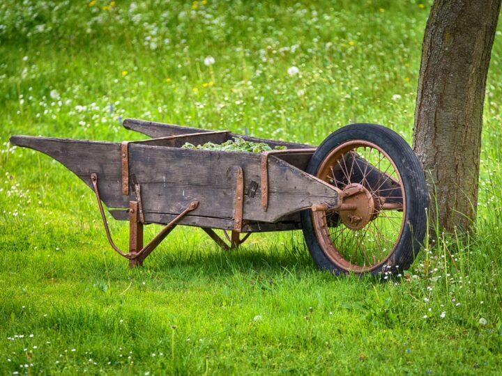 Vegetables in the wheel cart