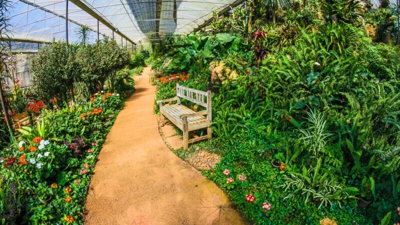 Green house for growing plants